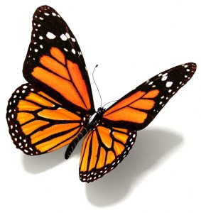Design-Picture-Butterfly-03-283x300