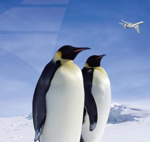 avjet_1_PenguinAd